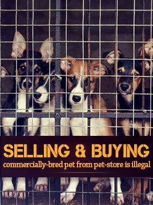 Don't Buy Commercially-Bred Pets In California